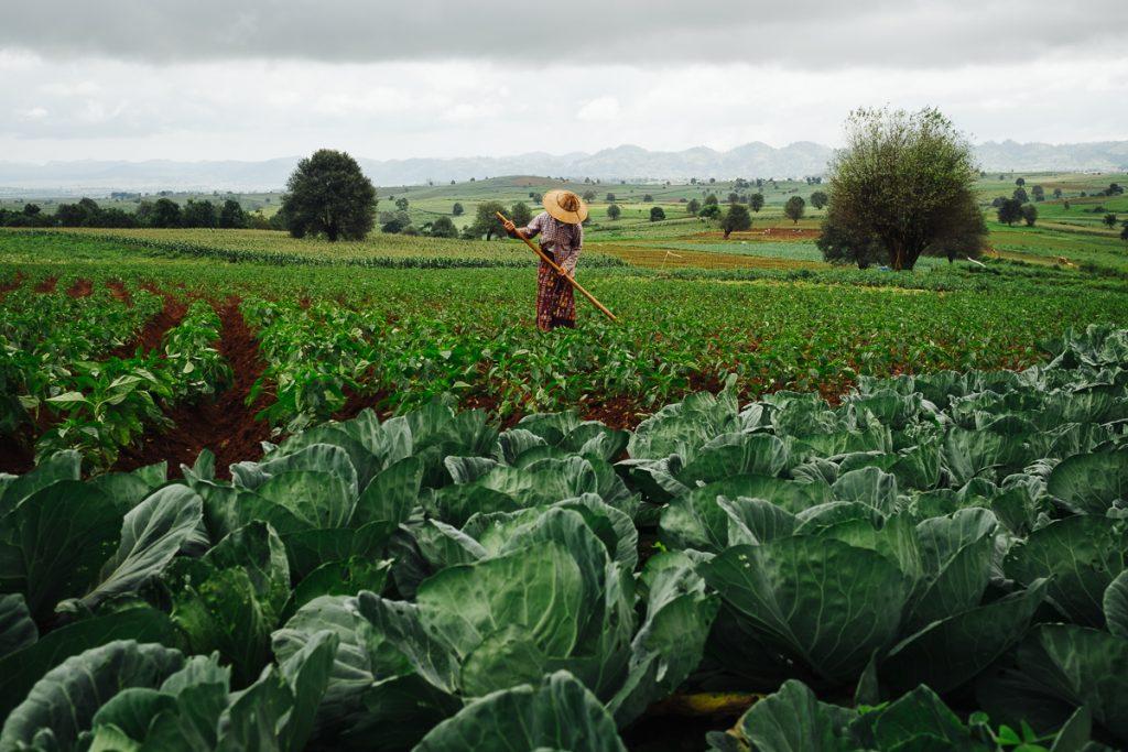 Mjanmarsko podeželje, med mestom Kalaw in jezerom Inle